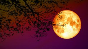 Read more about the article Lunar Eclipse – 5 June 2020
