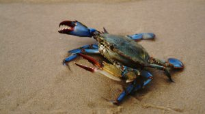 The crab is the symbol for the zodiac sign of Cancer